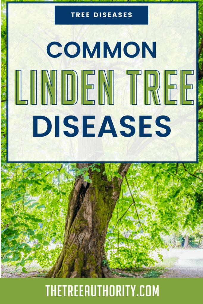 Common Linden Tree Diseases