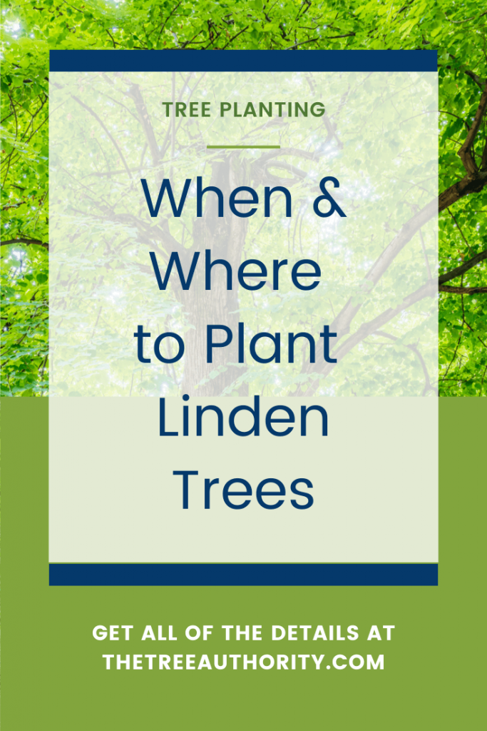 Where to plant Linden trees