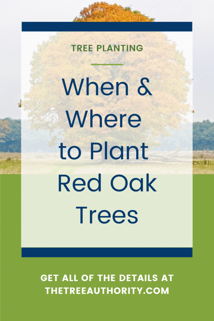 Where to plant red oak trees