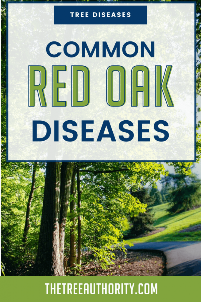 Common Red Oak Diseases