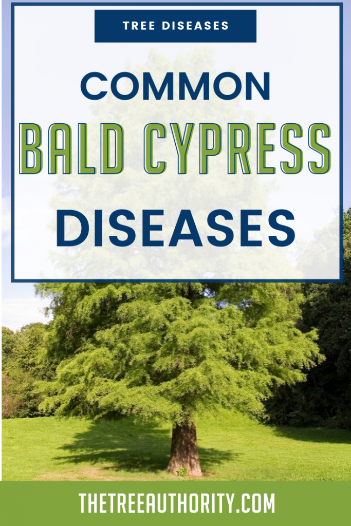 Common Bald Cypress Tree Diseases